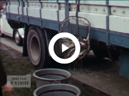 Keyframe of Dieren vrijlating / Autocross / Koninginnedag / Veenklooster / Huwelijksreis / Lente / Boswandeling Olterterp, 1971-1974