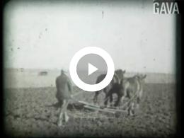 Keyframe of Paarden in oorlogstijd