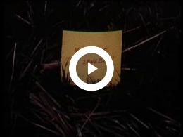 Keyframe of Ooievaars, kemphanen en winterbeelden