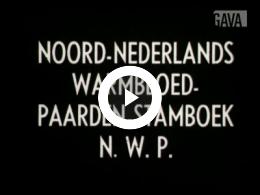 Keyframe of Hengstenkeuring N.W.P, Leeuwarden 1950