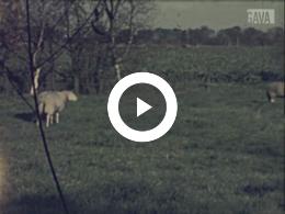 Keyframe of Familiefilm Wever