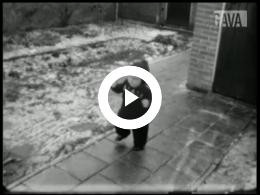 Keyframe of Voorjaar 1944