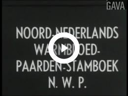 Keyframe of Paardenevenement Winthil te Winschoten