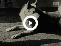 Keyframe of Honden, melkboeren
