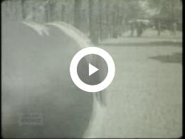 Keyframe of Familiefilm 3, 1947-1948