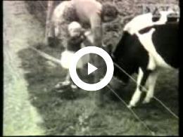 Keyframe of AV913 Dorpsfilm Wapserveen 1956, deel 2; J.W.L. Adolfs; 1956