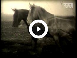 Keyframe of Paardenfilms Hermans Dijkstra / Hermans Dijkstra, 1935-1940