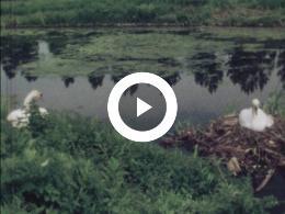 Keyframe of Amateurfilms van de familie Verlée - Jong leven