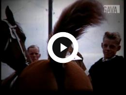 Keyframe of Paardenfestijn / D. Schuitemaker, 1961