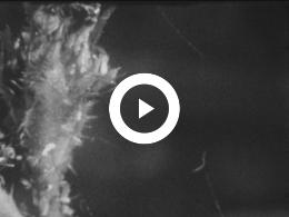 Keyframe of WINTER 1952 KLEUTERSCHOOL EN ALLERLEI