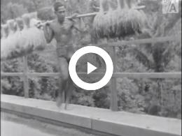 Keyframe of Een tocht naar Java's zuidkust / J. Nicolaï, circa 1947