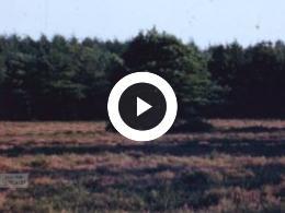Keyframe of Leeuwarden 1972, Geschiedenis 1970-1977, 1970-1977