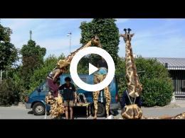 diergaarde_blijdorp_-_4_-_menselijke_giraffen_rotterdam_2009