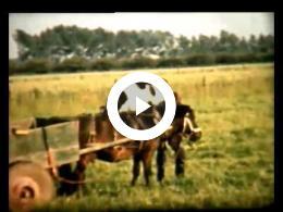 Boerenbedrijf in Itteren