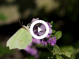 puur_natuur_klein_insectenboek_2