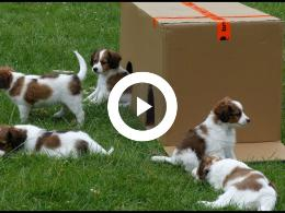 hond_fien_van_kinderboerderij_de_trotse_pauw_heeft_puppies_spijkenisse_2018