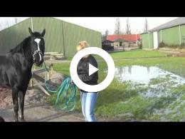 paarden_country_-_hippisch_centrum_simonshaven_2009