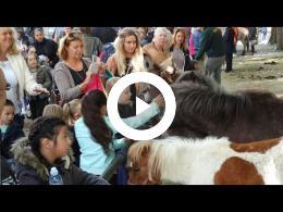 paardenmarkt_-_2e_pinksterdag_heenvliet_2016