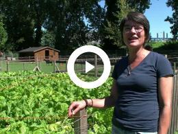 kinderboerderij_het_groene_woud_zoekt_vrijwilligers_pernis_2020