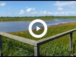 natuurgebied_wolvenpolder_zes_jaar_later_spijkenisse_2019