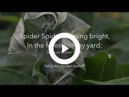 puur_natuur_de_tuinspin_the_garden_spider