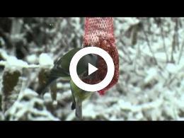 vogels_in_de_sneeuw_097b