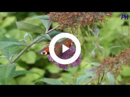 butterfly_in_the_garden