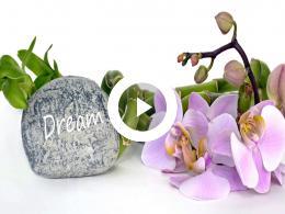 orchideeen_het_bekijken_waard.