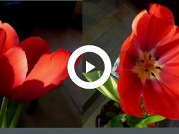 bloemenpracht_op_goeree-overflakkee