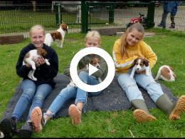 7_kooiker_puppys_op_kinderboerderij_de_trotse_pauw_spijkenisse_2021
