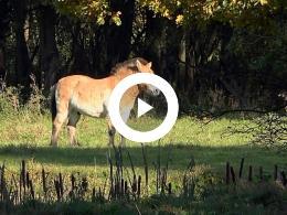 natuurpark_lelystad_herfst_2018_flevolandschap_4k_test_sony_fdr_ax100