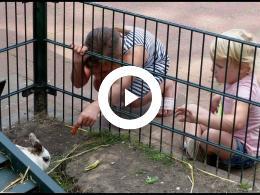 zomer_op_kinderboerderij_de_oedenstee_hoogvliet_2020