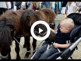 paardenmarkt_-_2e_pinksterdag_heenvliet_2018