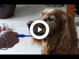 tandenpoetsen_hond_net_zo_belangrijk_als_de_verzorging_-_ozzie_van_deursen_spijkenisse_2020