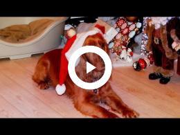 ozzie_ontmoet_kersthond._spijkenisse_2014