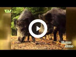naturenotes_dutch_national_parks