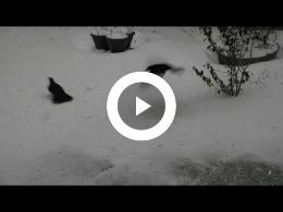 puur_natuur_de_kleine_wintertuin