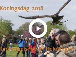 koningsdag_2018_-_nissewaard_roofvogelshow_in_hekelingen