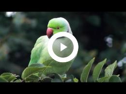 wild_birdwatching_hd