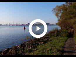 herfst_in_het_ruigeplaatbos_hoogvliet_2019