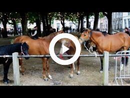 paardenmarkt_-_2e_pinksterdag_heenvliet_2015