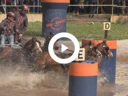 paardendagen_eersel_2019