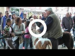 paardenmarkt_heenvliet_2016_-_2e_pinksterdag