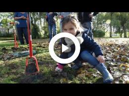 bewonersgroep_waterland_plant_3000_narcisbollen_spijkenisse_2016