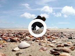 stranden_en_duinen