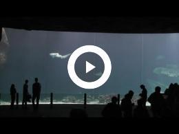 burgers_zoo_including_ocean_aquarium_-_arnhem_hd