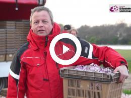 limmen_in_voorbereiding_bloemendagen_2017