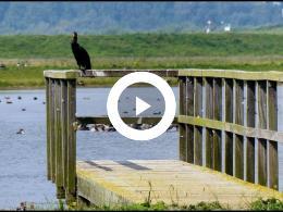 natuurgebied_wolvenpolder_komt_tot_ontwikkeling_spijkenisse_2017