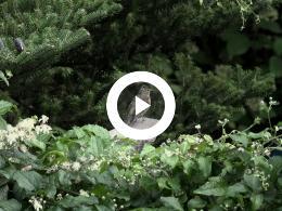 puur_natuur_vinken