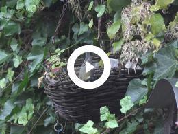 puur_natuur_de_kleine_najaarstuin
